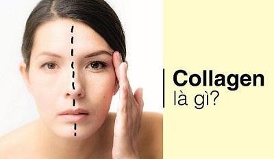 collagen-la-gi-1